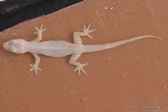 gecko killer of ac units air conditioner maintenance